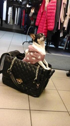 Koira_kassissa